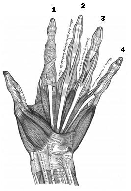 guitar-fret-hand-anatomy